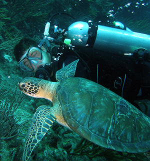 scuba diver and turtle - st maarten